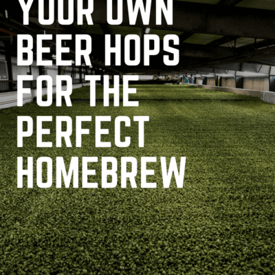 Growing Your Own Beer Hops for the Perfect Homebrew