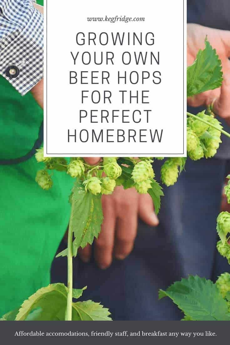 Growing Your Own Beer Hops for the Perfect Homebrew - keg fridge