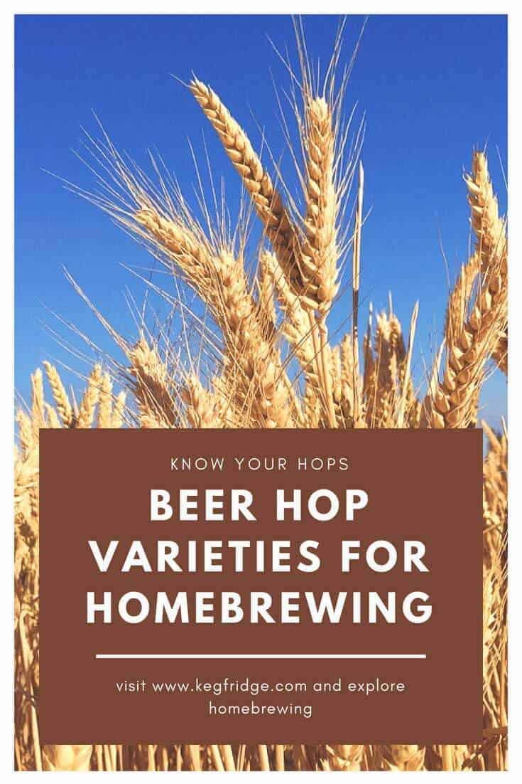 Beer Hop Varieties for Homebrewing - kegfridge.com