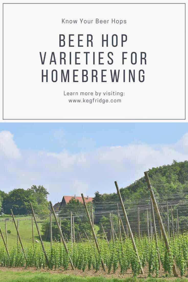 Beer Hop Varieties for Homebrewing
