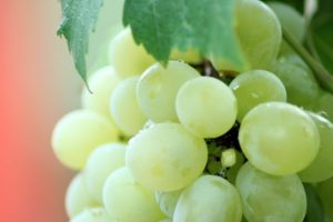 Making Wine at Home: - grapes - kegfridge.com